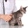 Ветеринарные клиники в Мглине